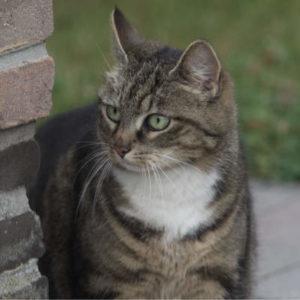 Luna onze kat